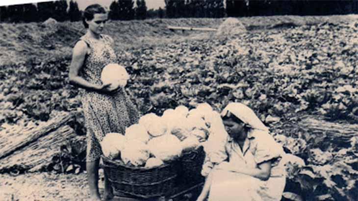 Овощной совхоз